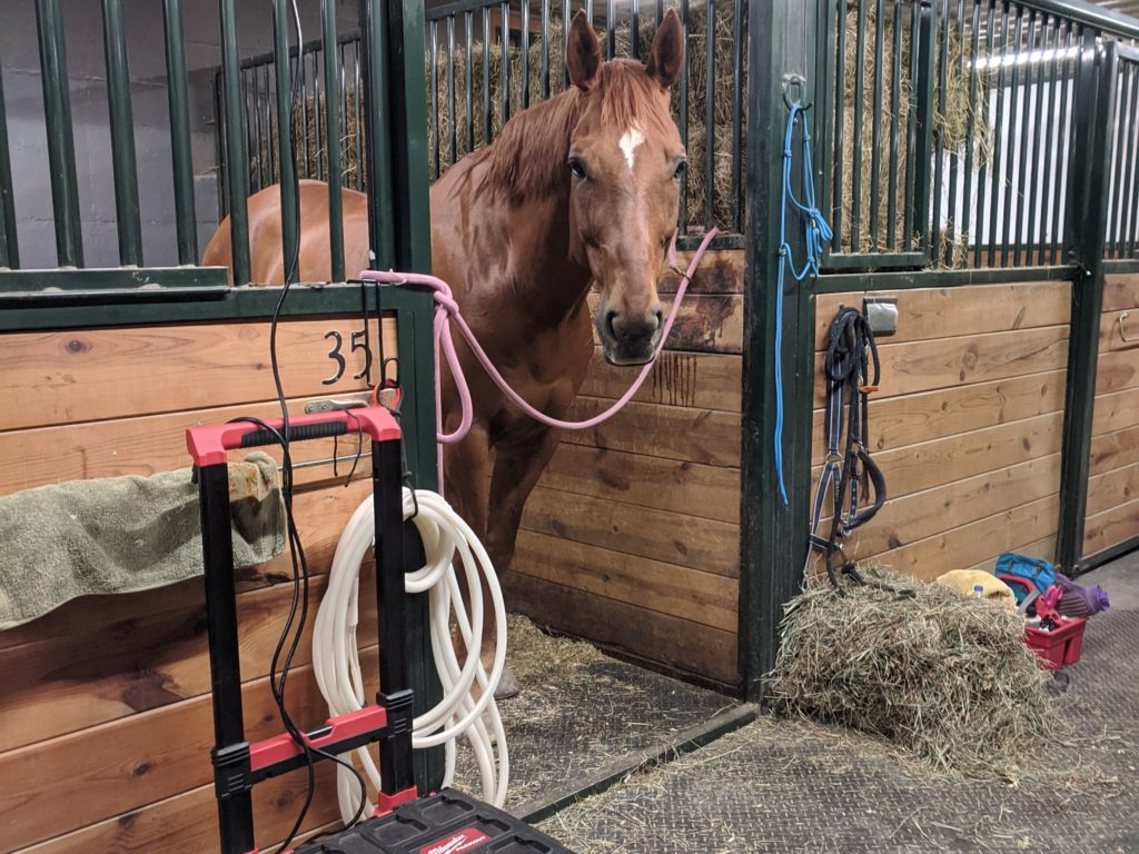 red horse looking out stall door, magnawave machine in front of him